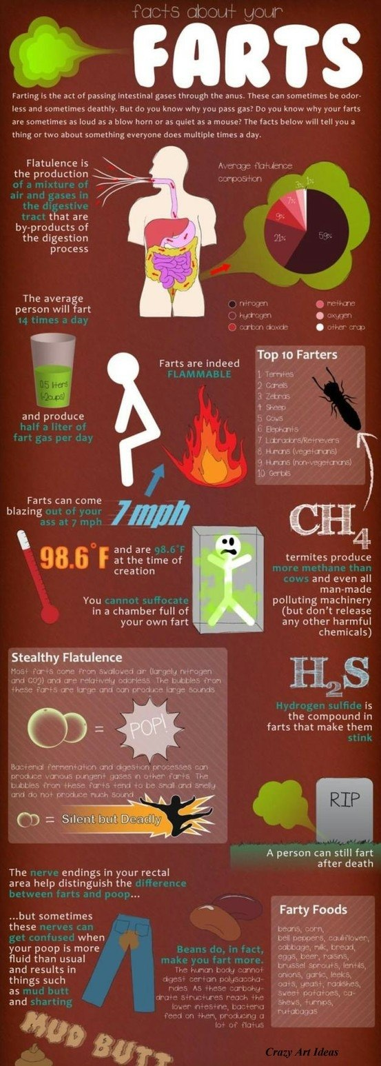 Facts About Farting Infographic