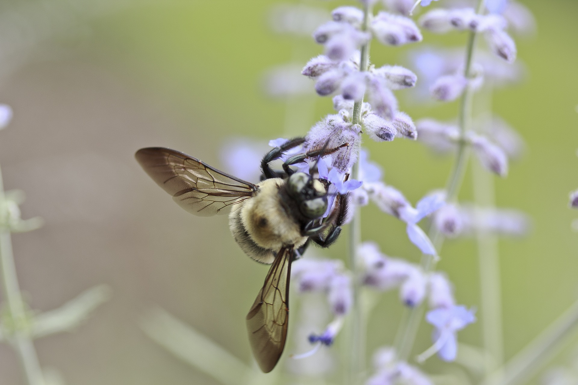 bee pollination and allergies